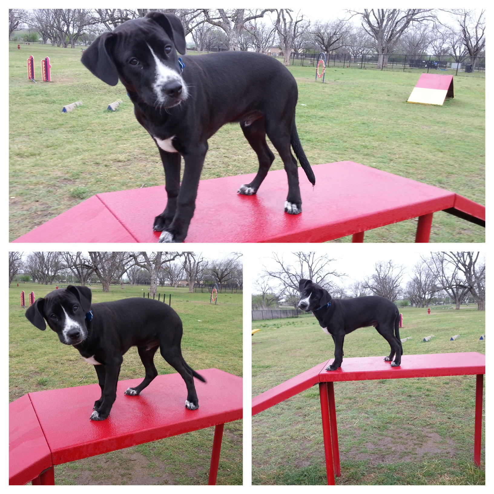 Private Dog Training Indianapolis